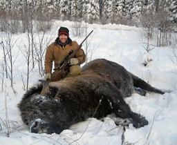 Hay-Zama Bison Hunt